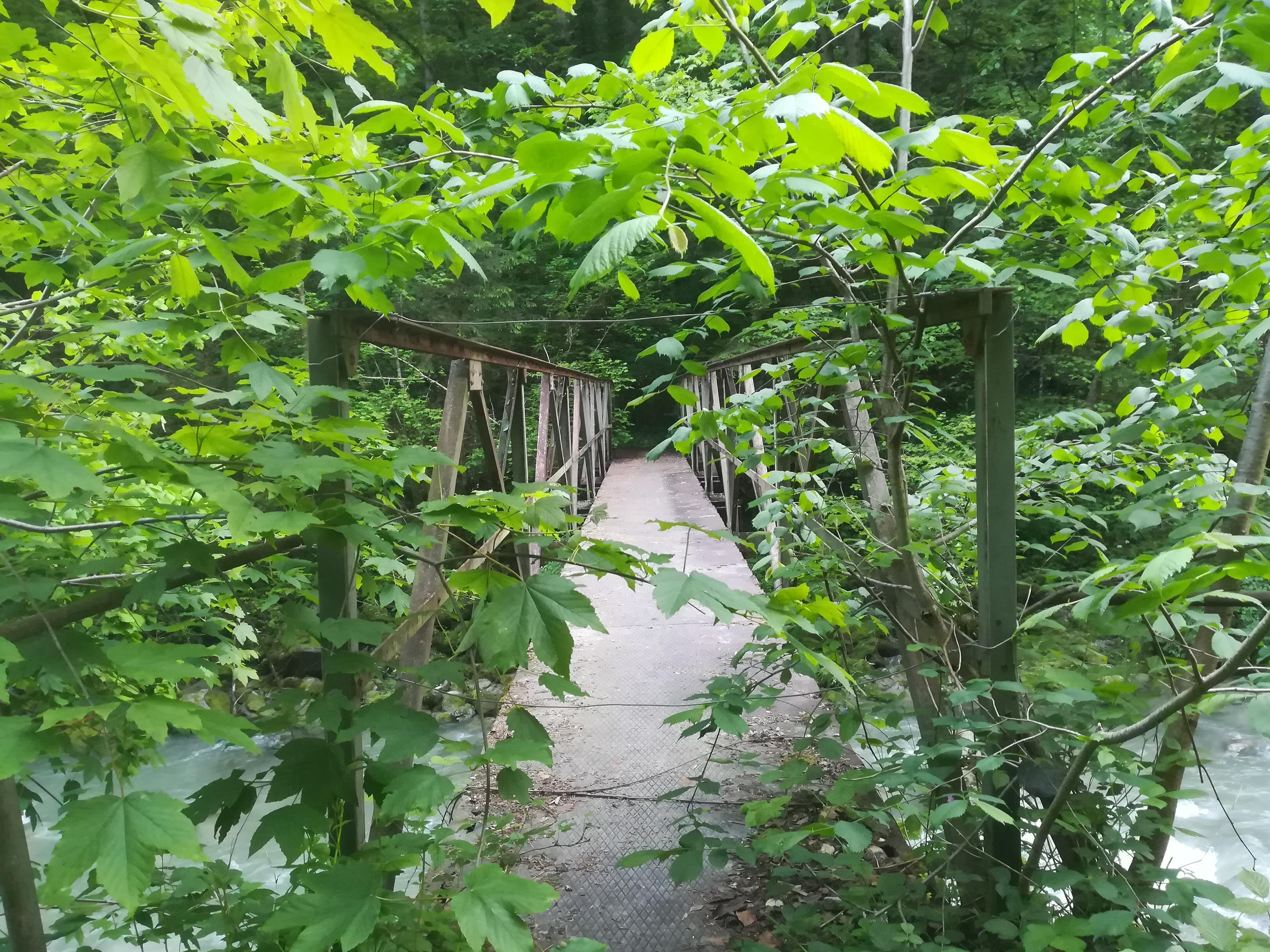 zugewachsene Brücke